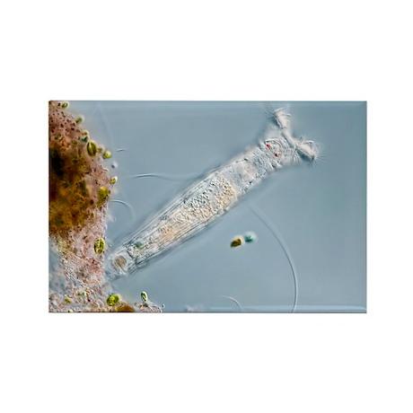 ht micrograph - Rectangle Magnet (100 pk)