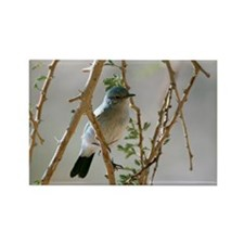 Blackstart in a tree - Rectangle Magnet (100 pk)