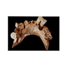 Early human mandible - Rectangle Magnet (100 pk)