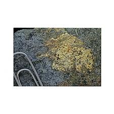 - Rectangle Magnet (100 pk)