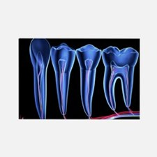 Teeth, cross section - Rectangle Magnet (100 pk)