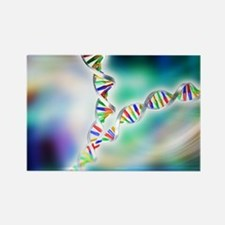 DNA replication - Rectangle Magnet (100 pk)