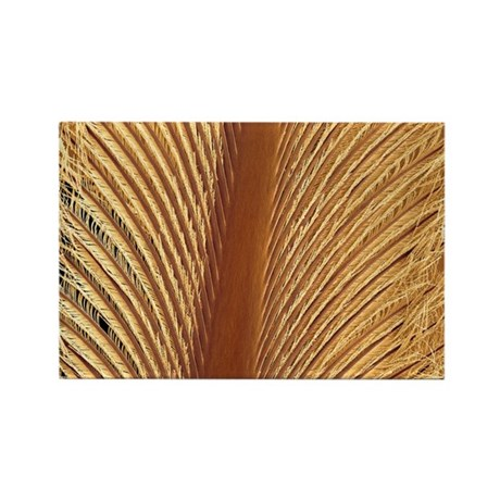 Penguin feather, SEM - Rectangle Magnet (100 pk)