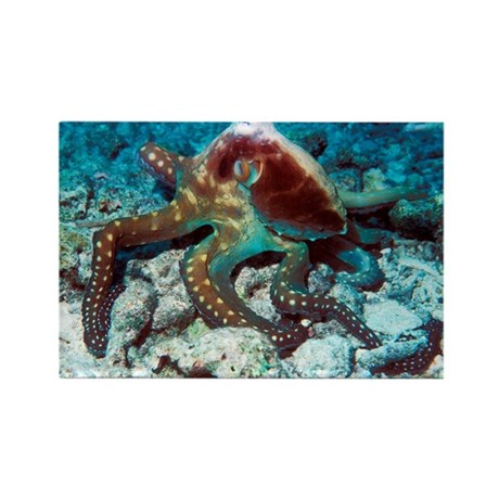 Day octopus - Rectangle Magnet (100 pk)