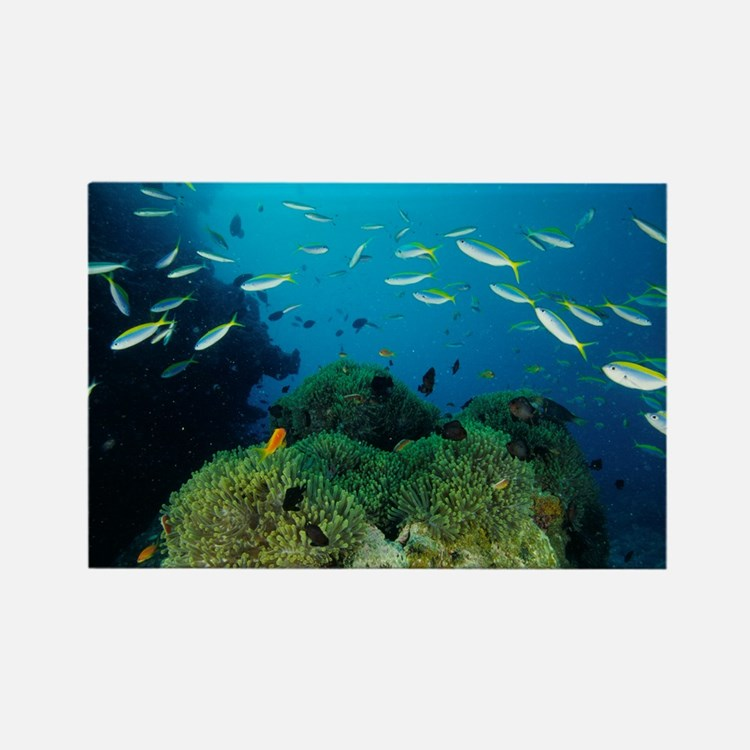 Fusilier fish - Rectangle Magnet (100 pk)