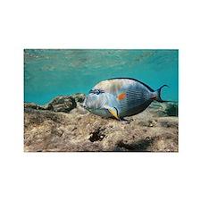 Sohal surgeonfish - Rectangle Magnet (100 pk)