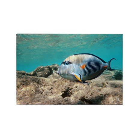 Sohal surgeonfish - Rectangle Magnet (100 pk)