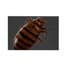 Bedbug, artwork - Rectangle Magnet (100 pk)
