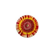 Chrysanthemum carinatum flower - Mini Button
