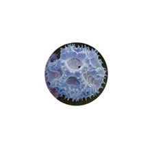 Hawksbeard pollen, SEM - Mini Button