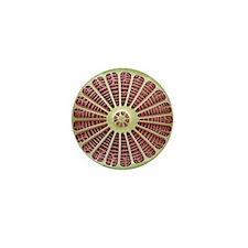 Diatom, SEM - Mini Button
