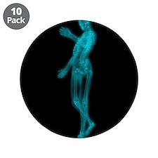 Human skeleton, artwork - 3.5