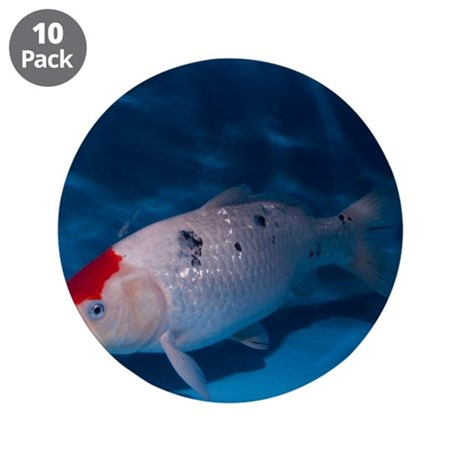 Sanke koi carp pool 3 5 by sciencephotos for Pool of koi
