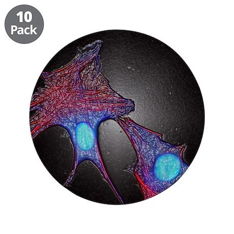 Cultured cancer cells - 3.5