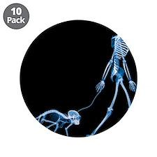 Skeleton walking a marmoset, X-ray - 3.5