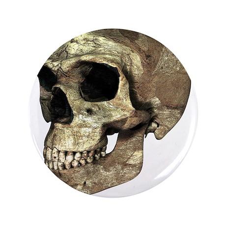 Homo erectus skull - 3.5