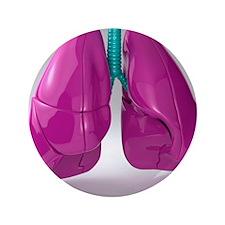 Respiratory system, artwork - 3.5
