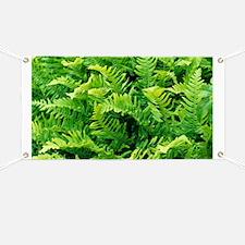 Fern leaves - Banner