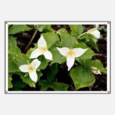 Wake robin (Trillium grandiflorum) - Banner