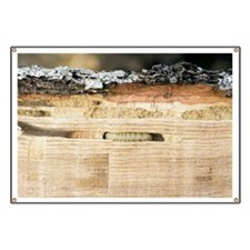Wood-boring insect larva - Banner