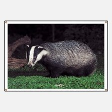 European badger at dusk - Banner