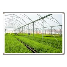 Interior of a greenhouse - Banner