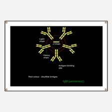 Immunoglobulin pentamer, artwork - Banner