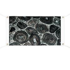 Orbicular diorite rock - Banner
