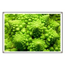 Romanesco cauliflower head - Banner