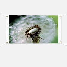 Dandelion seed head - Banner