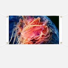 Lion's mane jellyfish - Banner