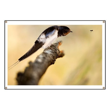 Male swallow - Banner