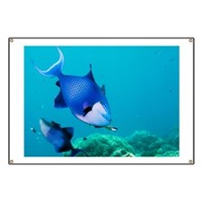 Redtoothed triggerfish - Banner