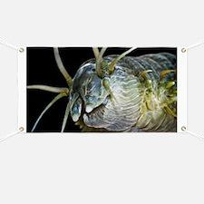 Ragworm head - Banner