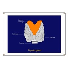 Thyroid gland, artwork - Banner