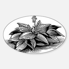 Hosta, lino print - Sticker (Oval 10 pk)