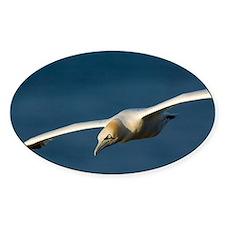 Northern gannet in flight - Decal