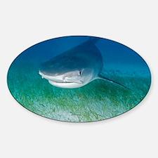 Tiger shark - Sticker (Oval 10 pk)
