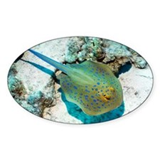 Bluespotted ribbontail ray - Decal