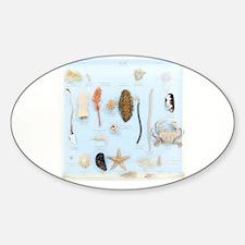 Marine life specimens - Sticker (Oval 10 pk)
