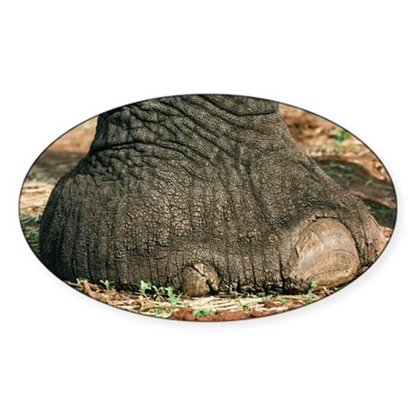 African elephant's foot - Sticker (Oval 10 pk)