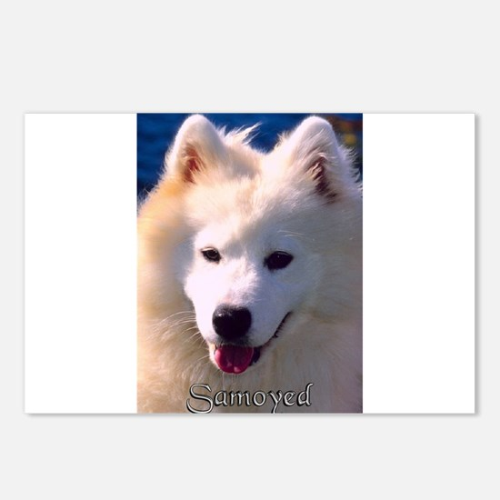 samoyed.jpg Postcards (Package of 8)