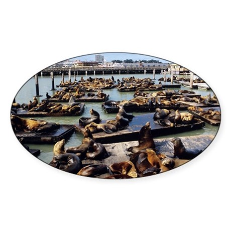 California sea lions - Sticker (Oval 10 pk)