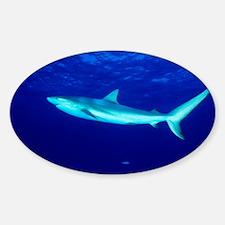Caribbean reef shark - Sticker (Oval 10 pk)