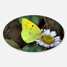 Clouded yellow butterfly - Decal