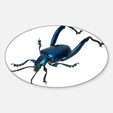 Frog beetle - Decal