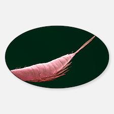 Krill, SEM - Sticker (Oval 10 pk)