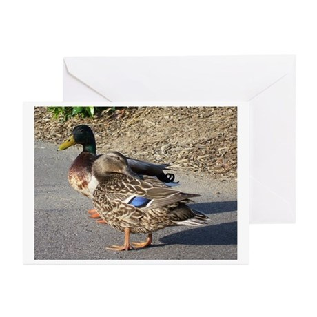 WHAT'S UP DUCK Greeting Cards (Pk of 10)