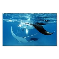 Giant manta rays - Decal