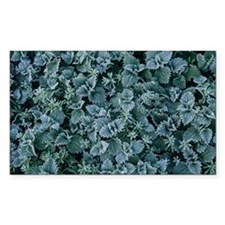 Frost on nettles - Decal
